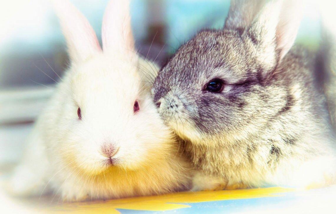 ТОП 5 самых популярных пород домашних кроликов