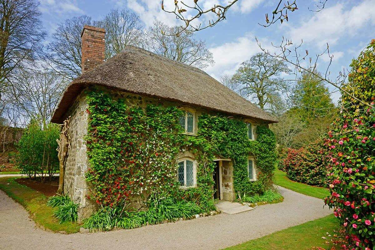 вечнозеленый плющ на доме